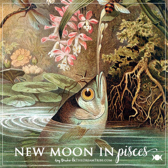 new-moon-pisces-feb-2015